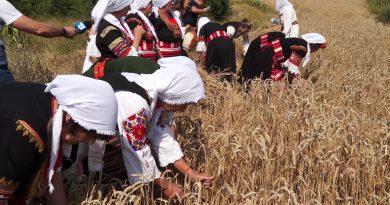 видео/ Традиции по време на жътва в Мало село – темата в Споделено – 30.07.2021г.